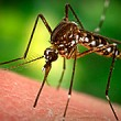 Mississippi reaches 40 West Nile cases; two in Calhoun