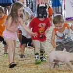 Calhoun County Fair Pig Scramble
