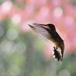Hummingbirds flock by the dozen to Wilson home in Mt. Moriah