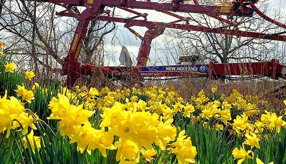 Spring around the corner