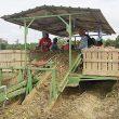 """Sweet potato harvest described as """"fair"""""""