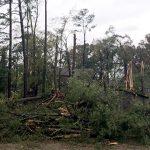 Heaviest storm damage south of Calhoun City